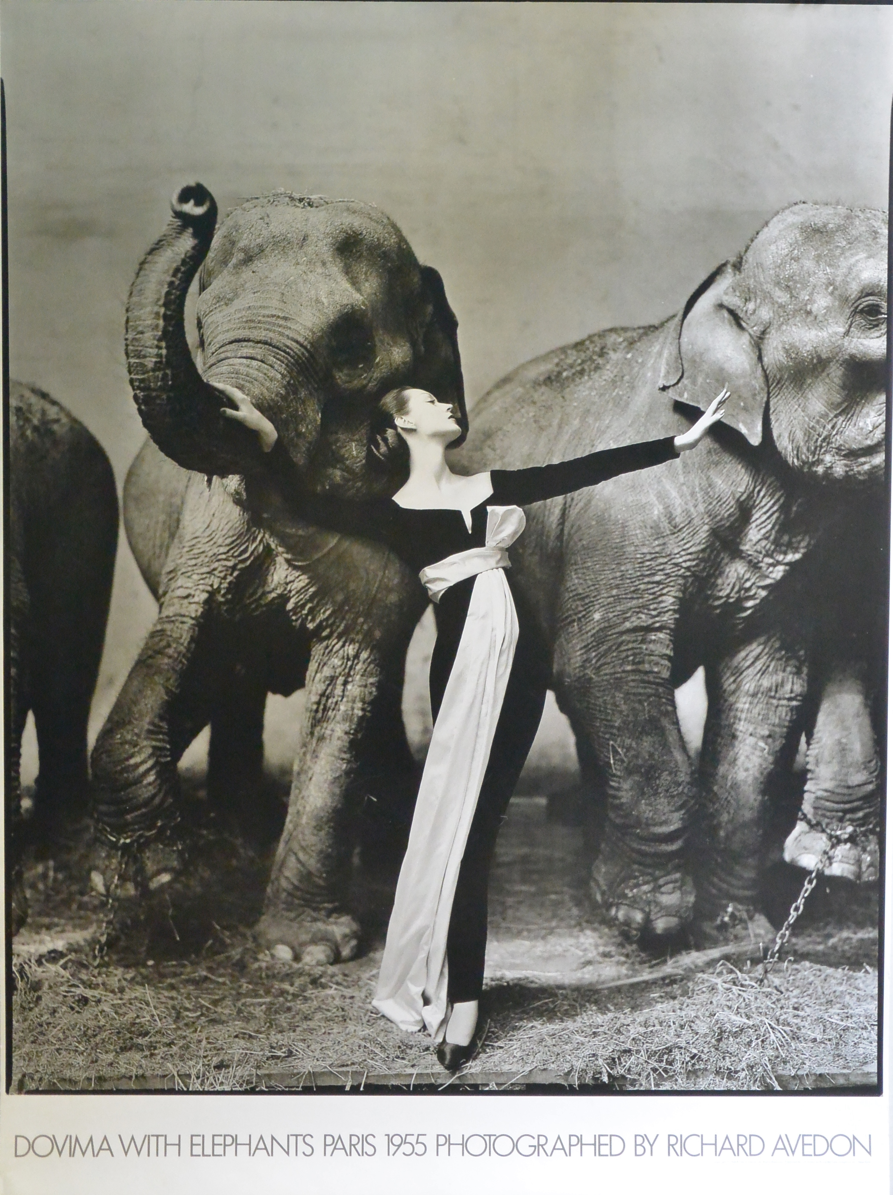 richard avedon dovima with elephants cartel original el marco verde obra gr fica posters. Black Bedroom Furniture Sets. Home Design Ideas
