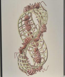 Escher M. C.