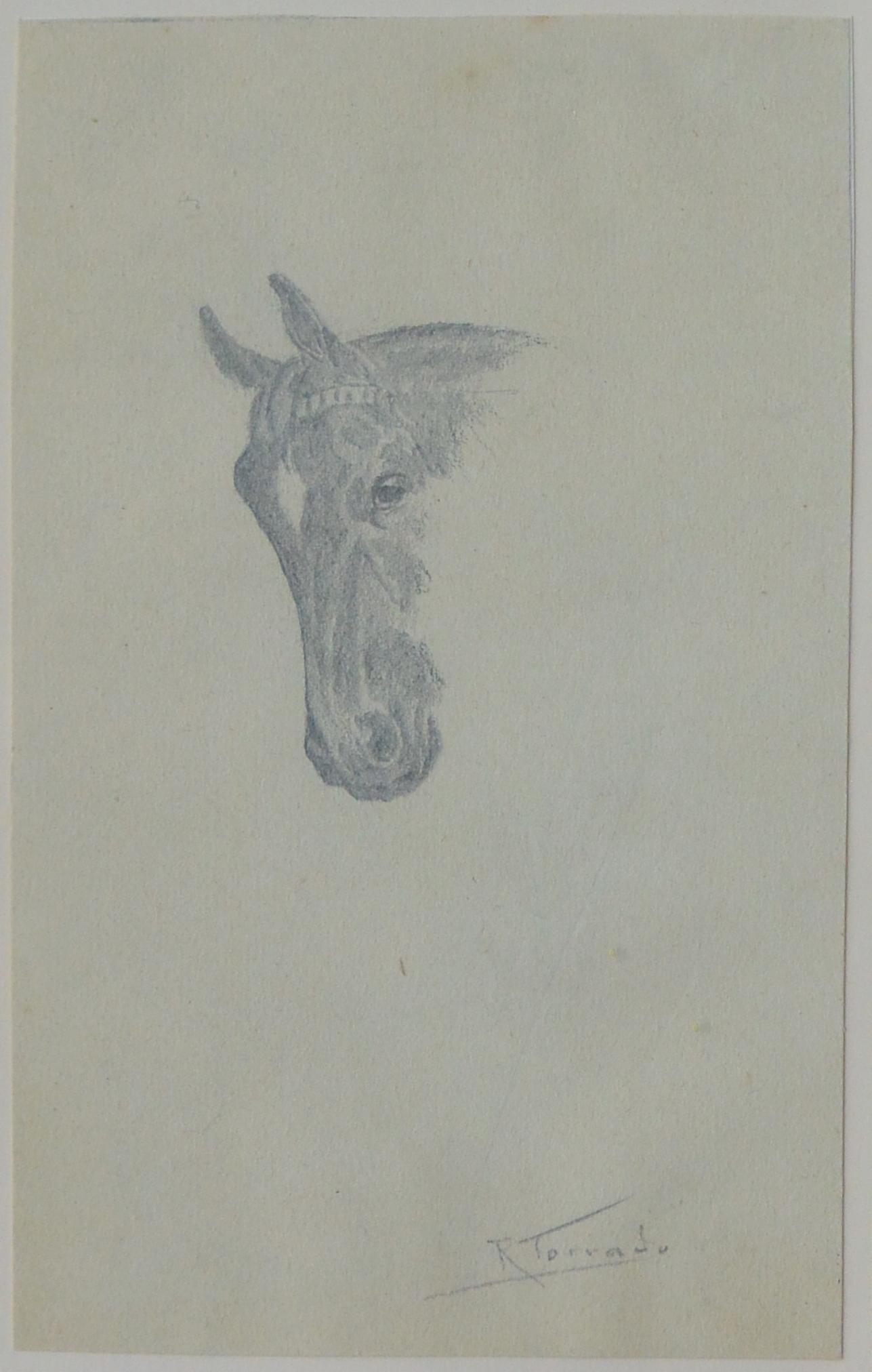 """Ramón Torrado – """"Cabeza de caballo II"""" dibujo lápiz papel, enmarcado ..."""