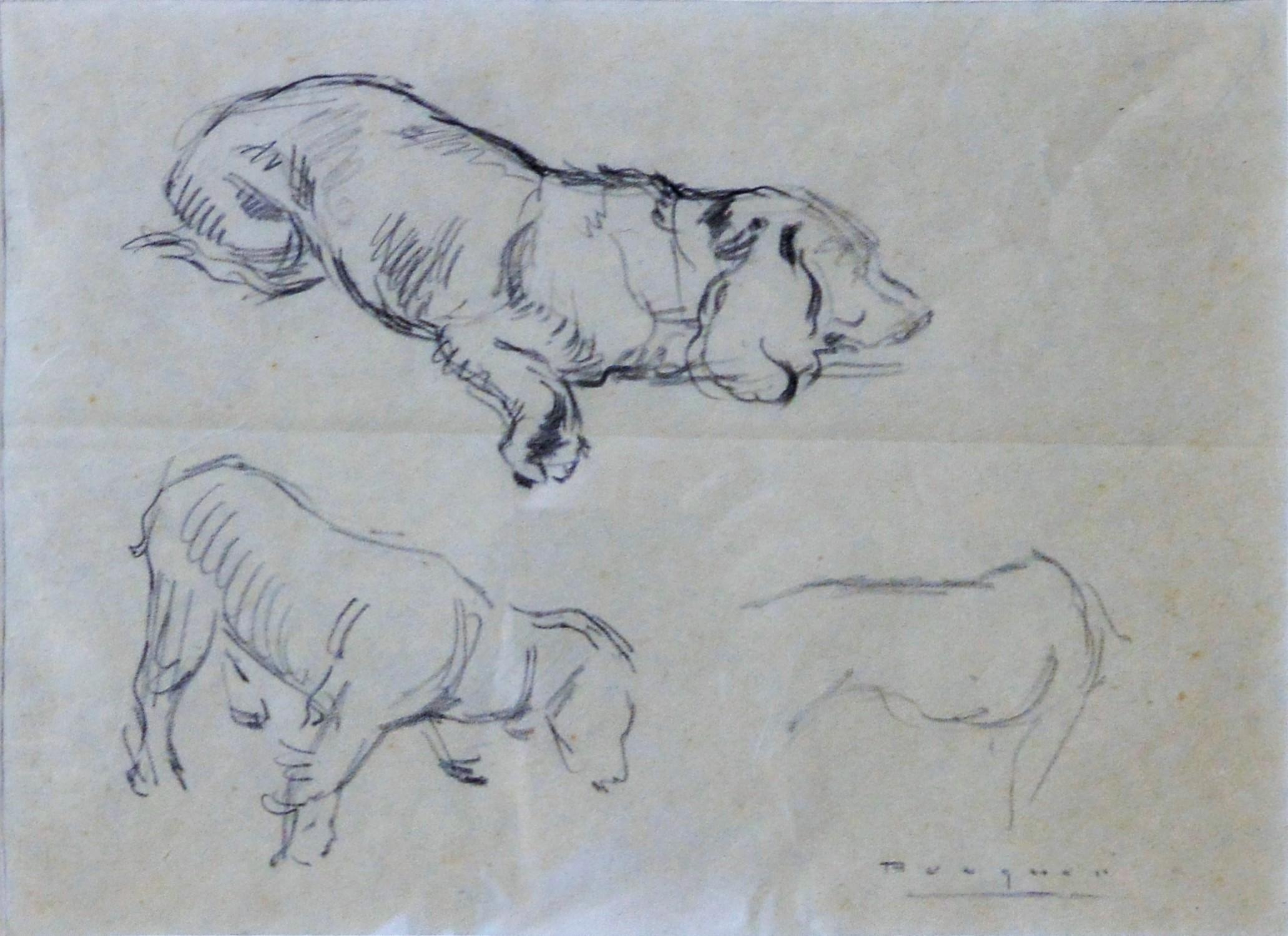 Carlos Becquer Estudio De Perros Dibujo Lápiz Papel Enmarcado