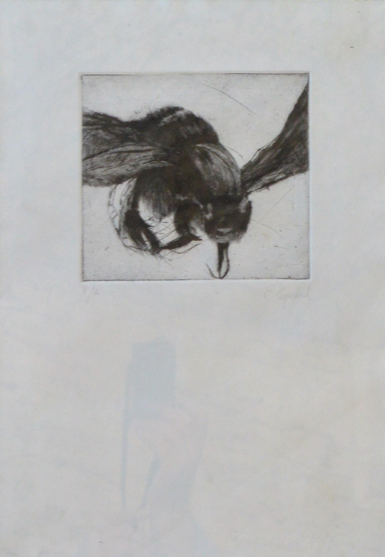 """Encarna Cepedal – """"Insecto"""" grabado, enmarcado – El Marco Verde ..."""