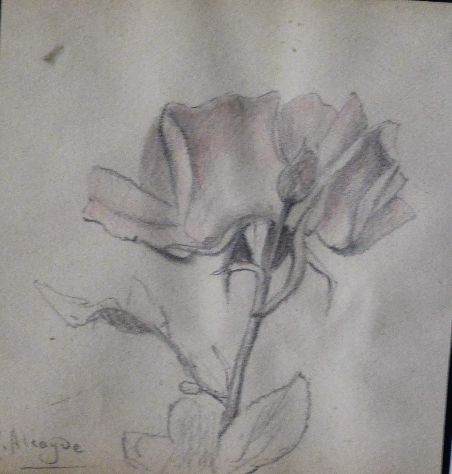 Julia Alcayde  Estudio de planta dibujo lpiz papel enmarcado