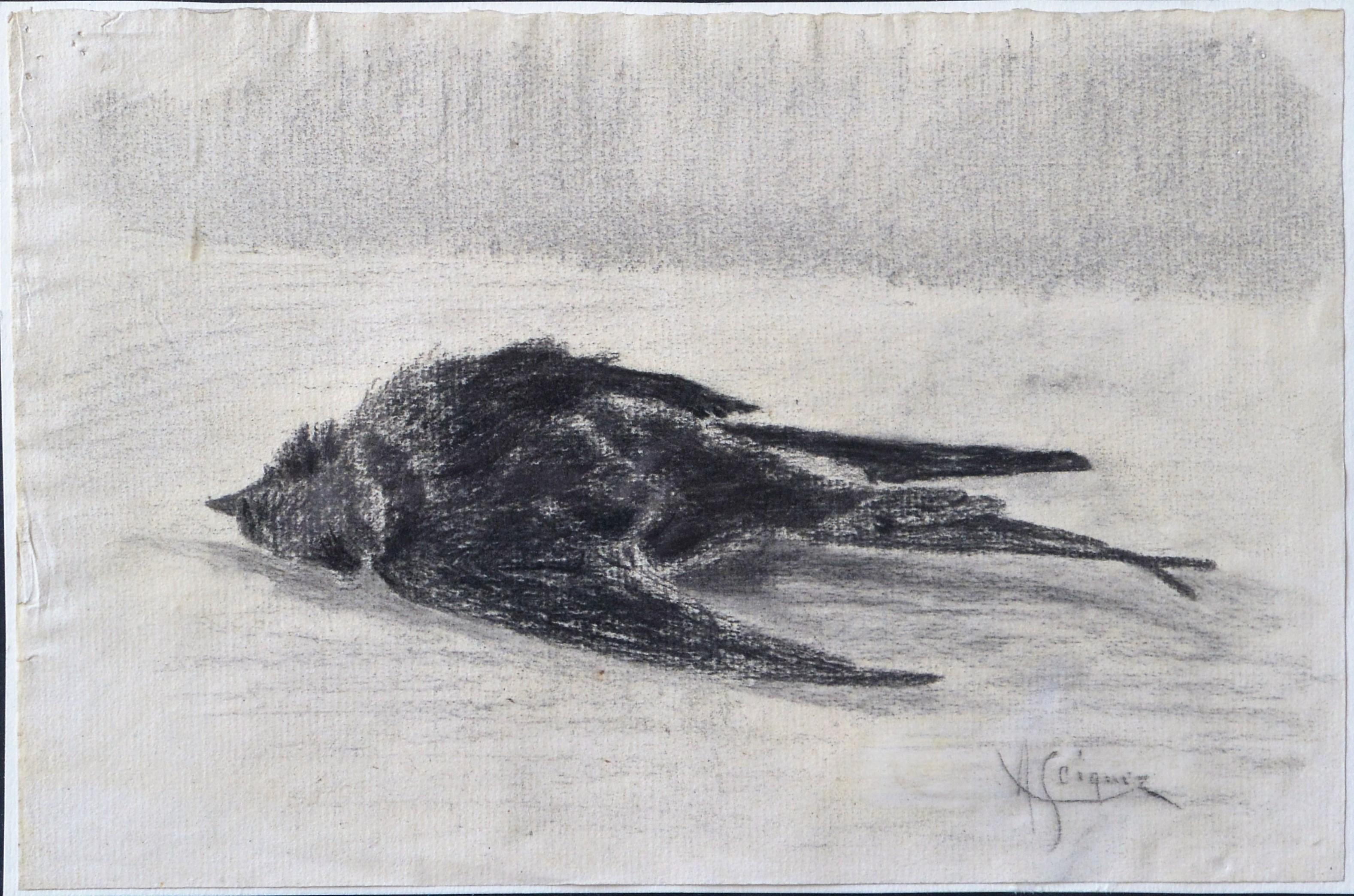 "Alejandro Seiquer – ""Pájaro muerto II"" dibujo carboncillo papel ..."