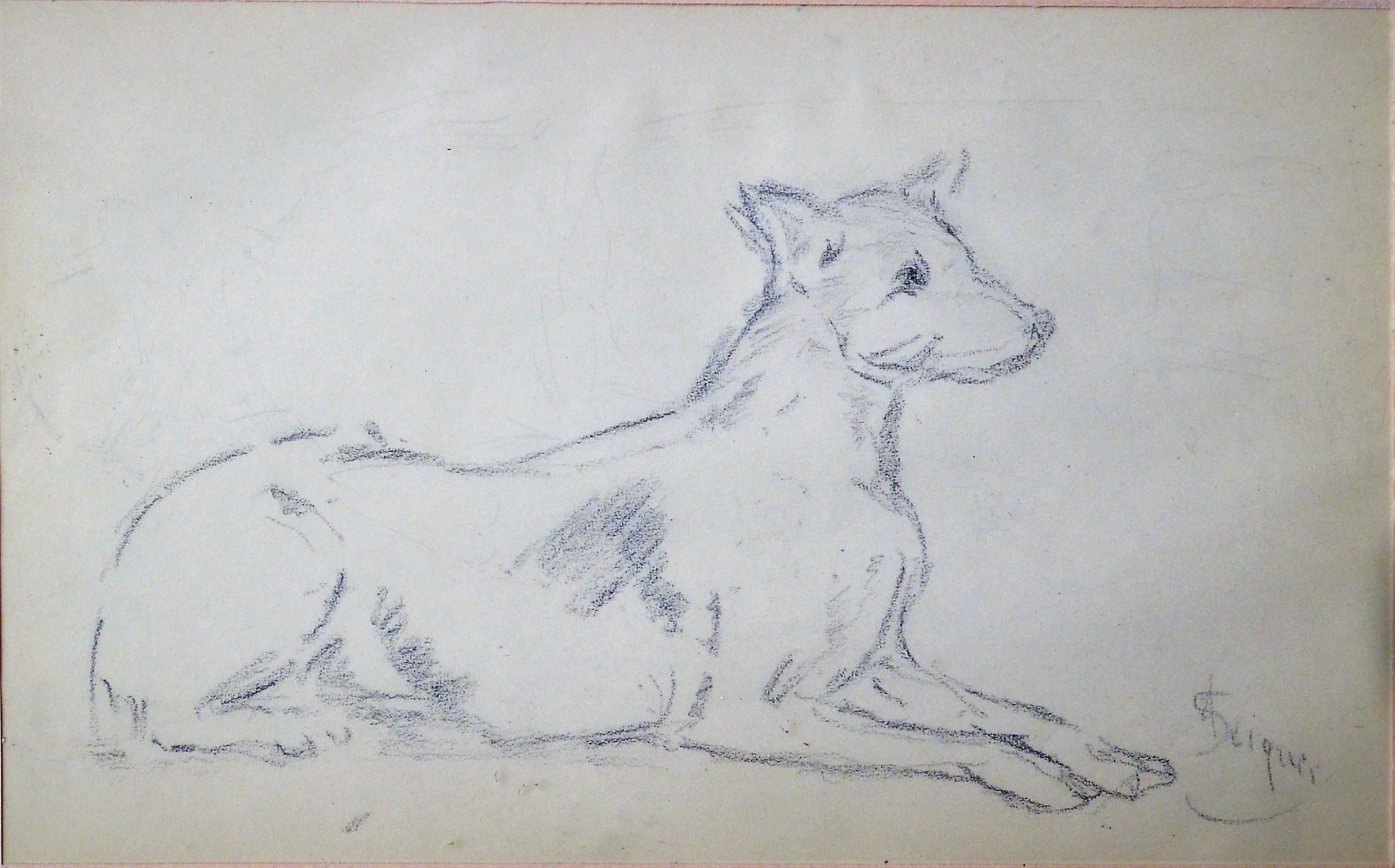Alejandro Seiquer Estudio De Perro Dibujo Lápiz Papel Enmarcado